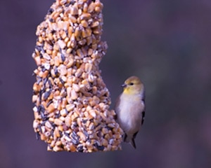 Photo of a bird feeder