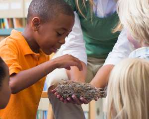 Children looking at a bird's nest in a classroom