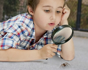 Young boy looking at a spider on the ground with a magnifying glass